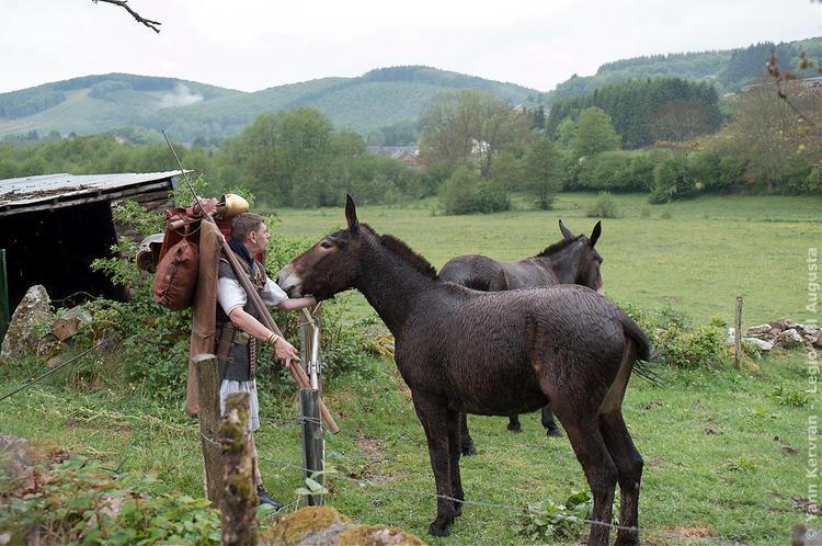 les deux mules sont trempées