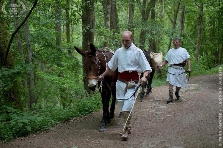 les mules et leurs muletiers