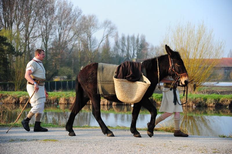 des mules pour accompagner les légionnaires romains