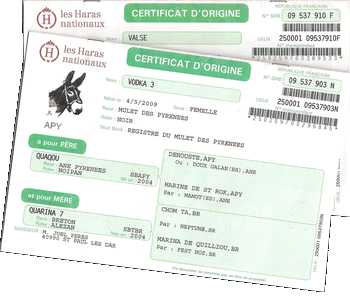certificat d'origine des mules