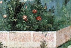 Les variétés présentées dans le Rosarium d'Autun