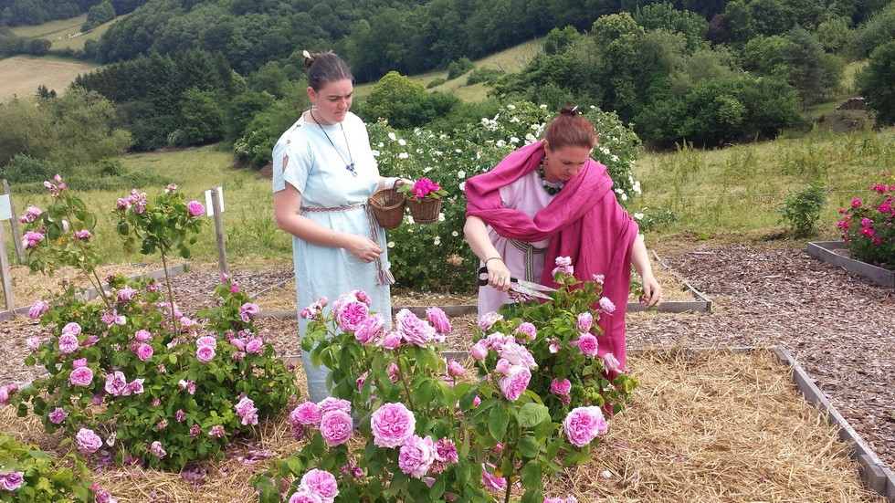 cueillette de roses