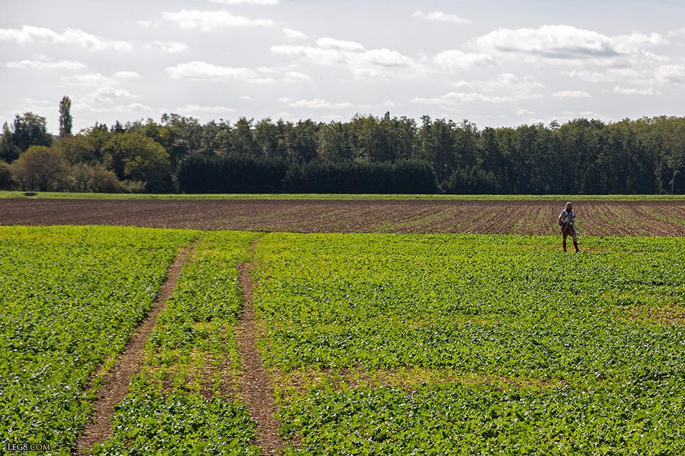 Sous ce champ de colza, le camp de Mirebeau-sur-Bèze